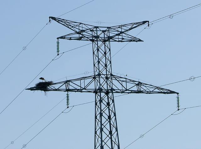 Nid sur un pylone