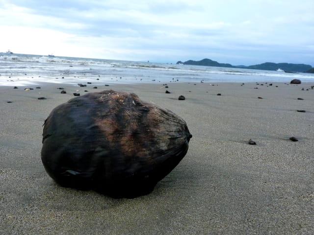 Noix de coco perdue