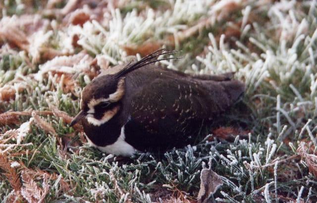 Nos oiseaux en hiver