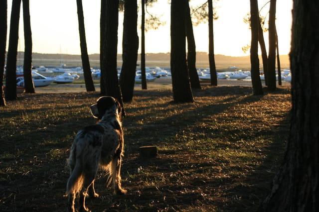 Notre chienne au soleil couchant