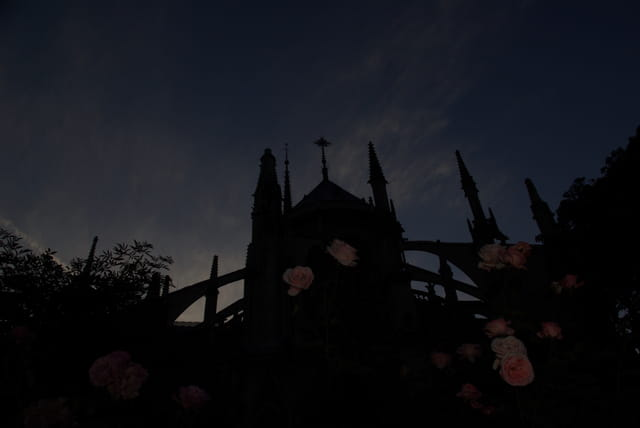 Notre-Dame de Paris et ses roses
