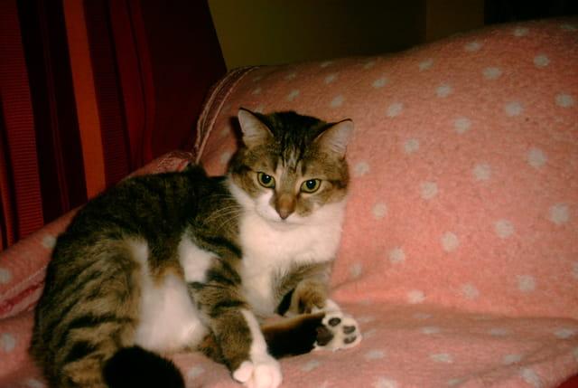 Notre gentil chat !