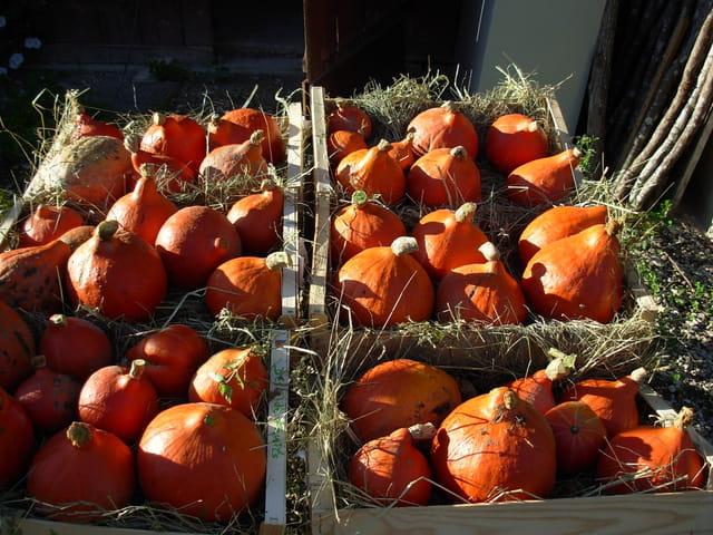 Nous préparons Halloween