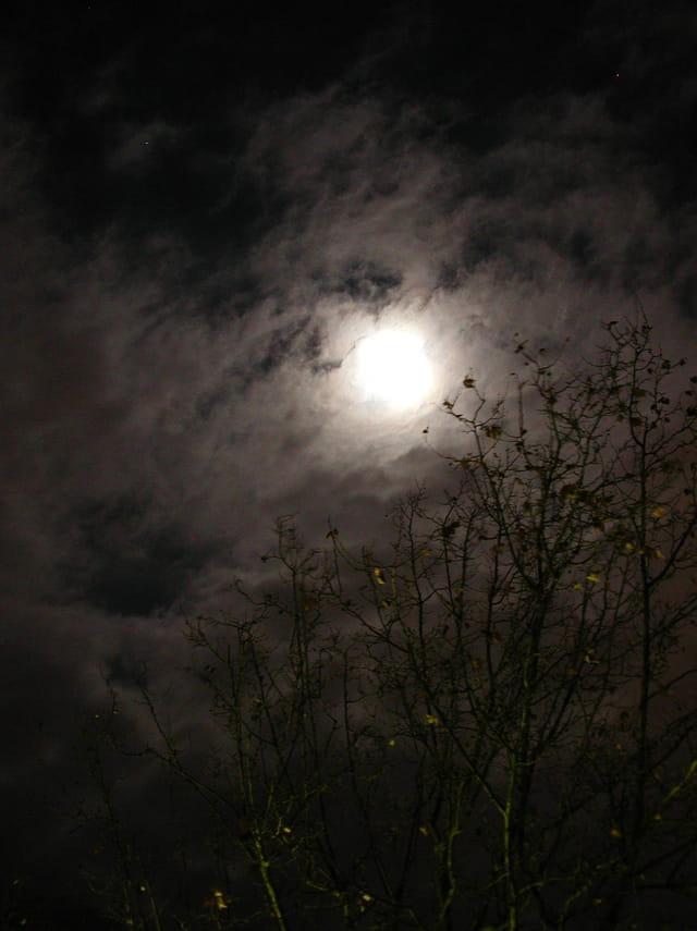 Nuit d'automne