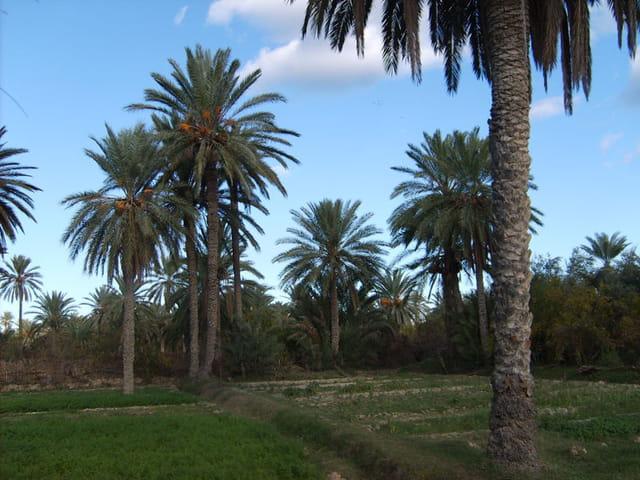 Oasis de Gabes