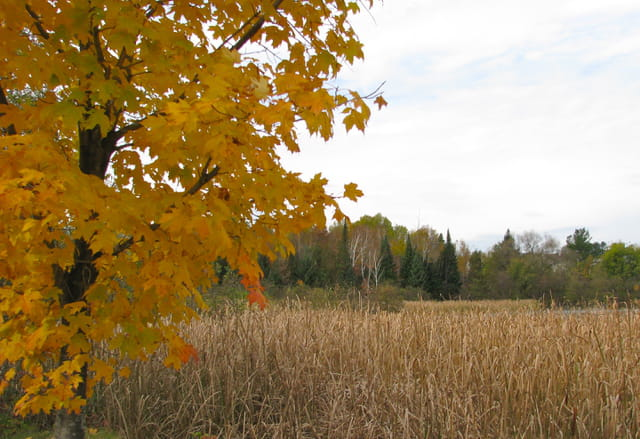 Ocre d'automne