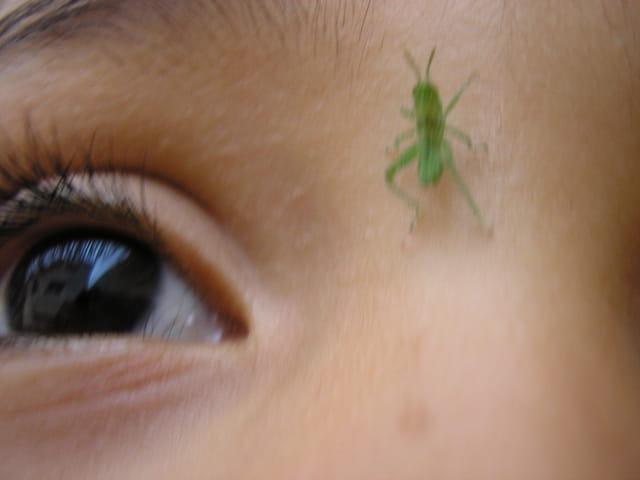 Oeil et bébé sauterelle