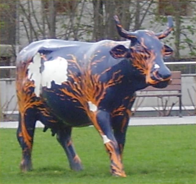 Oh la belle vache !