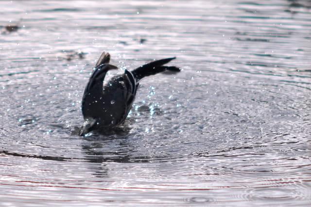 Oiseau dauphin