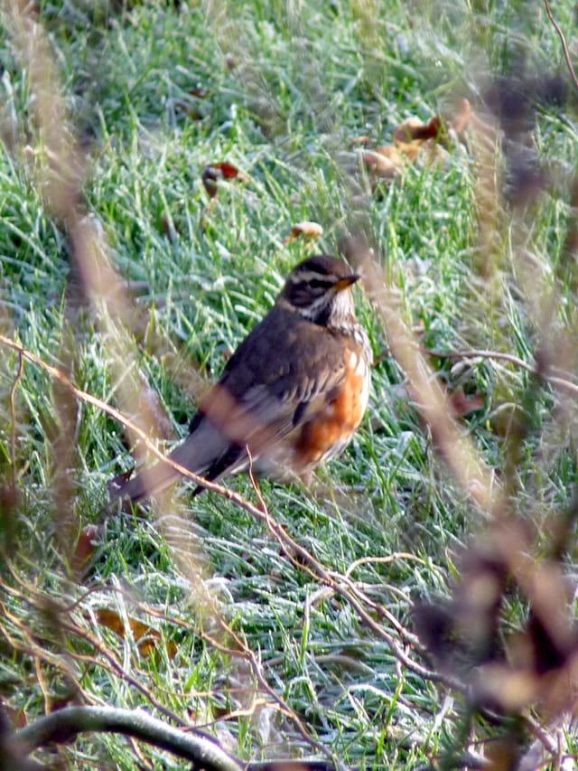 Oiseau un  matin d'hiver
