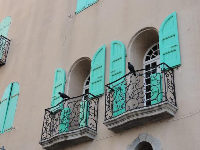Oiseaux de Collioure
