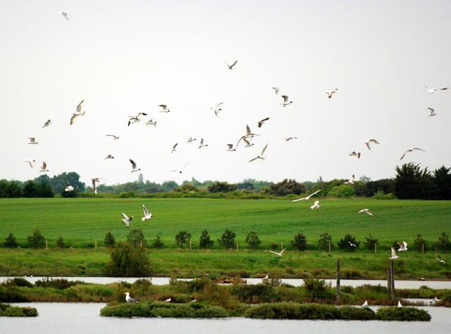 Oiseaux des marais