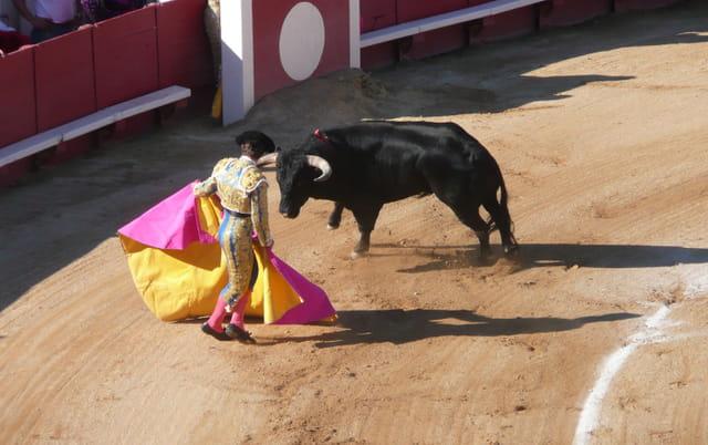 Ollé taureau 2