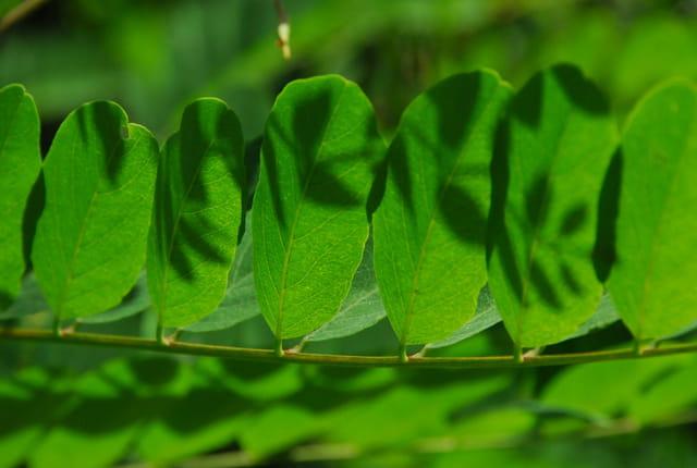 Ombre de feuilles sur d'autres feuilles