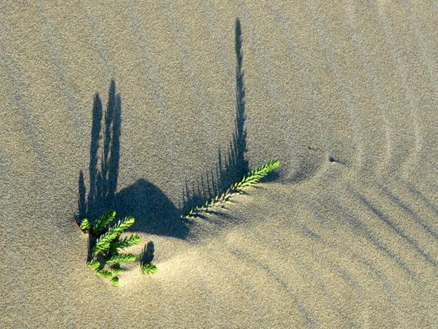 Sable, ombre et vent