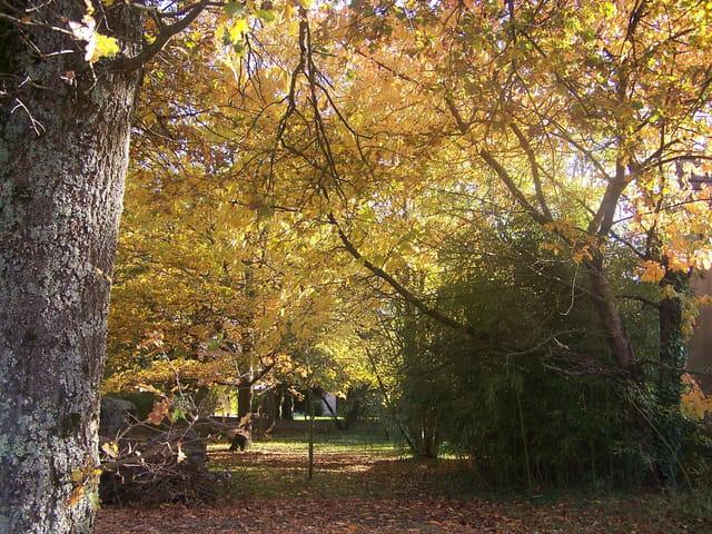 Ombres et lumière  de l'automne
