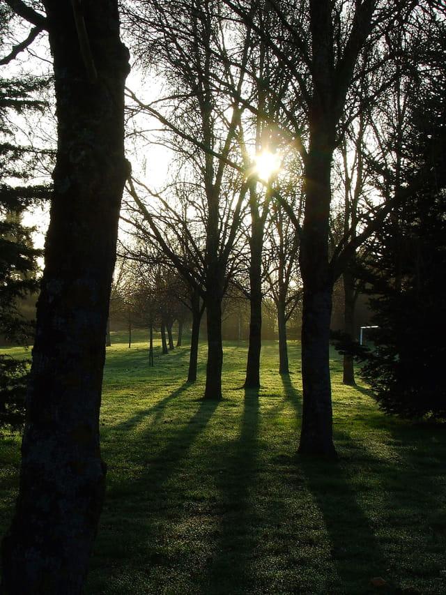 Ombres et lumières du matin