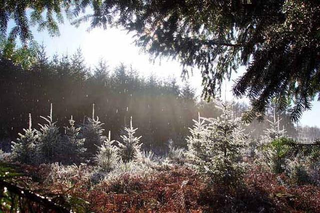 Ombres et lumières un matin d'hiver