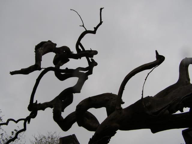 Ombres étranges dans le cimetière