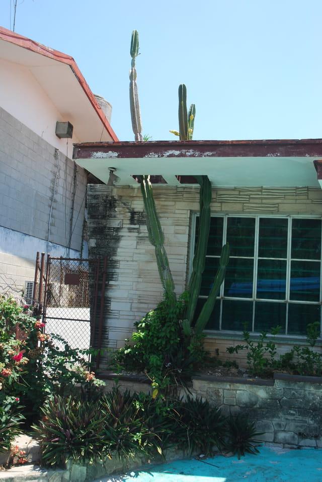 on respecte les plantes à La Havane
