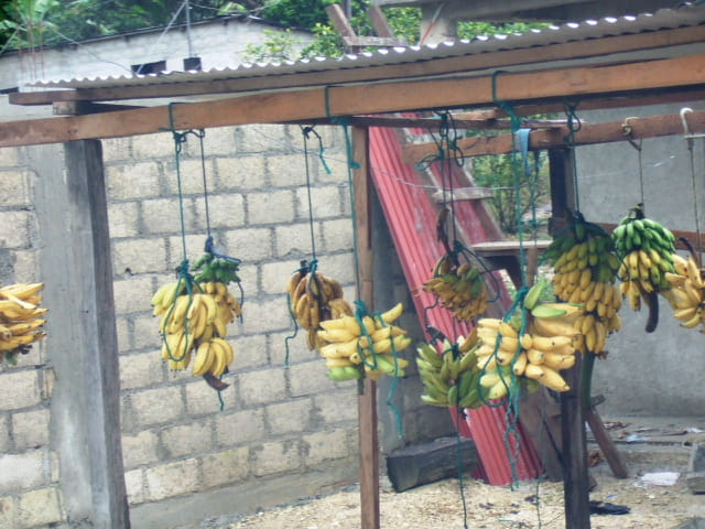 On the road : bananes