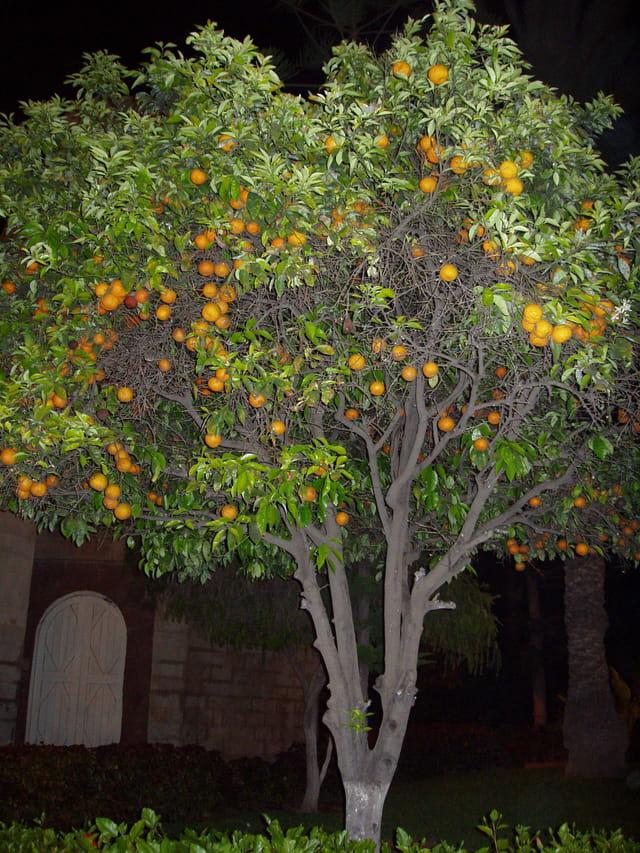 Orangers
