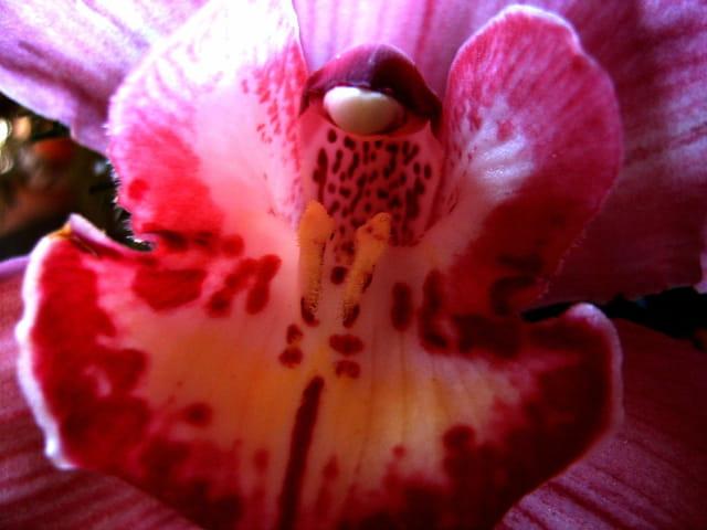 Orchidée au crépuscule