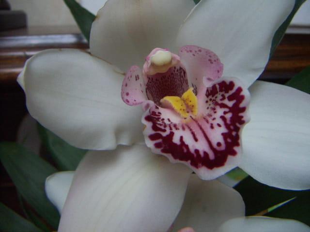 Orchidée en détail
