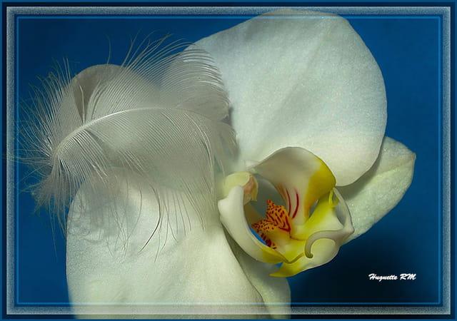 Orchidées la fleur  des souvenirs