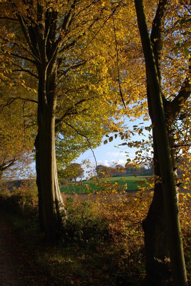 Orée d'automne