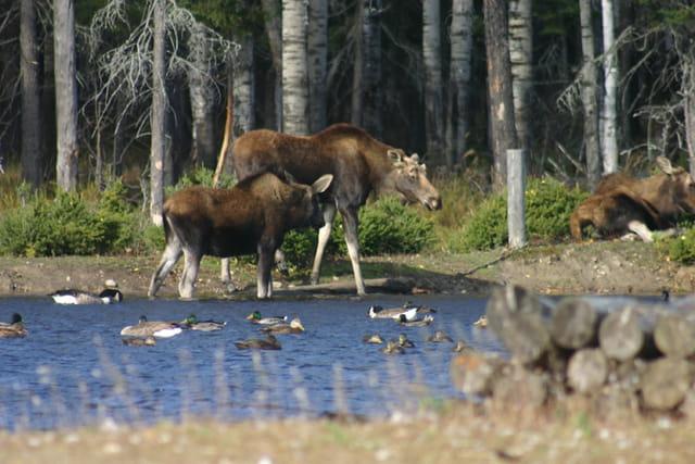 Origaux et lac
