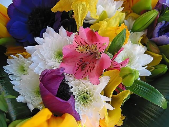 Osmose de fleurs