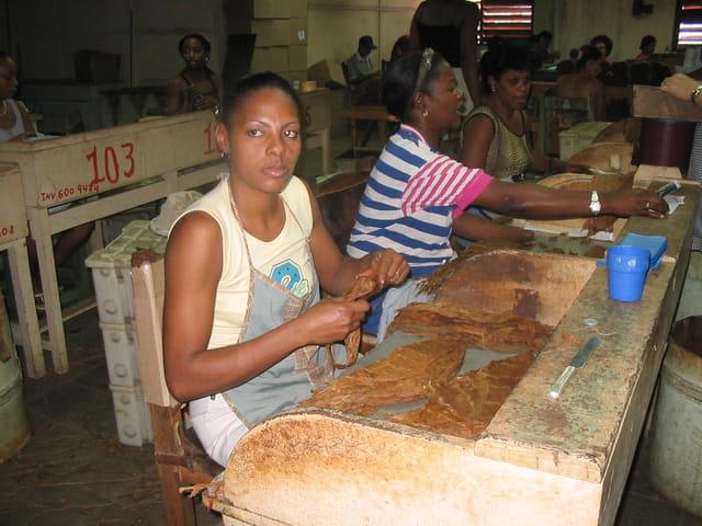 Ouvrières dans une fabrique de cigares