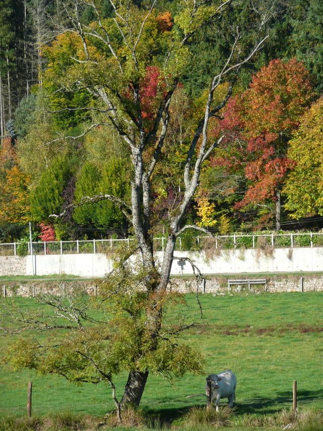 Ozolles à l'automne