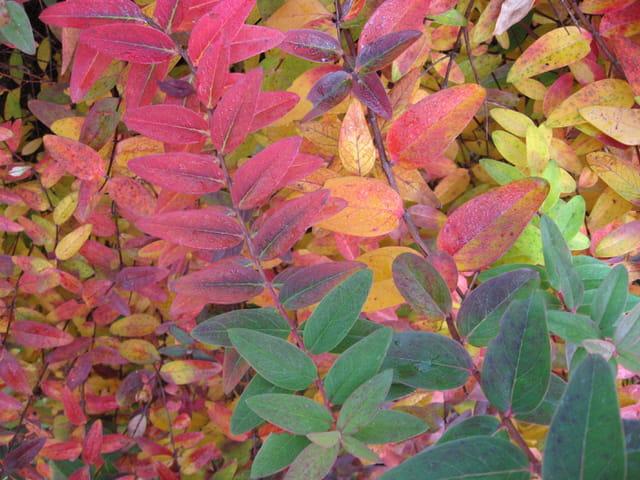 Palette de couleurs d'automne