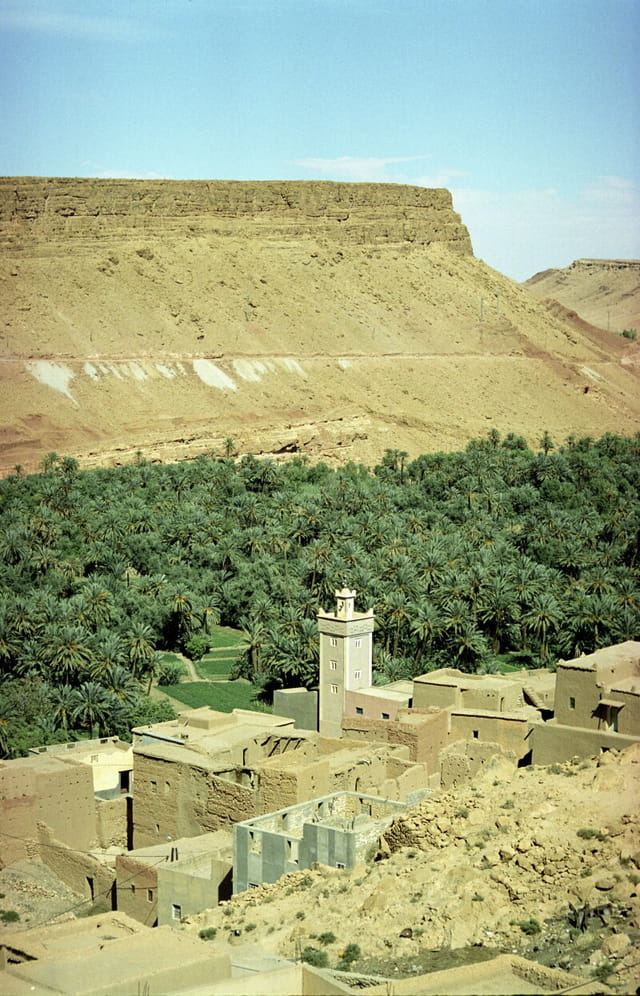 Palmerais Maroc