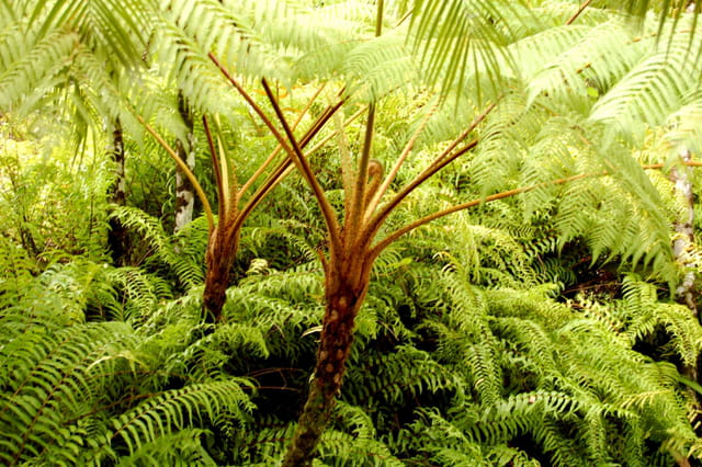 Palmes et fougères