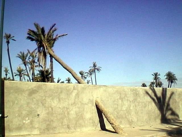 Palmier dans mur