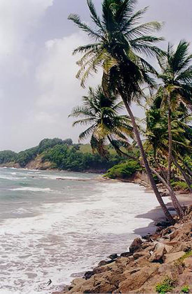 Palmiers de Sainte-Marie