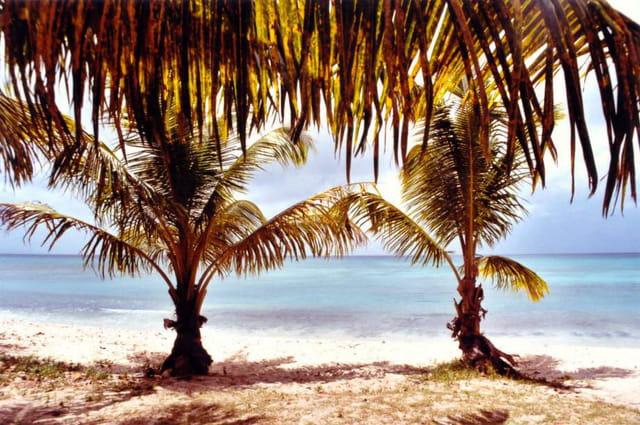 Palmiers exotiques