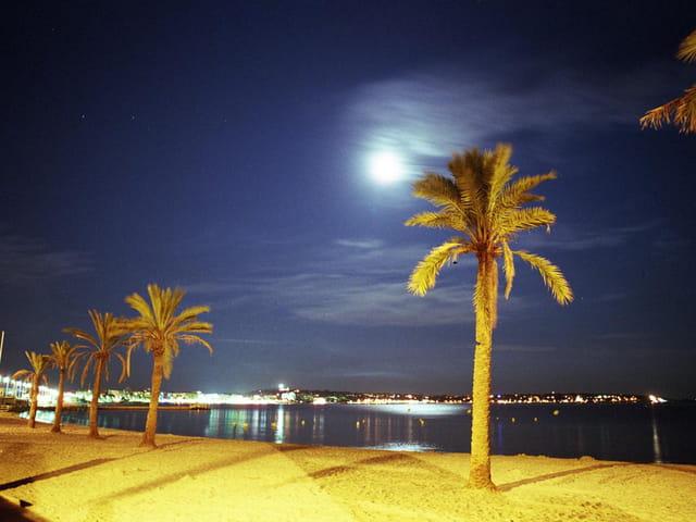 Palmiers sous la lune