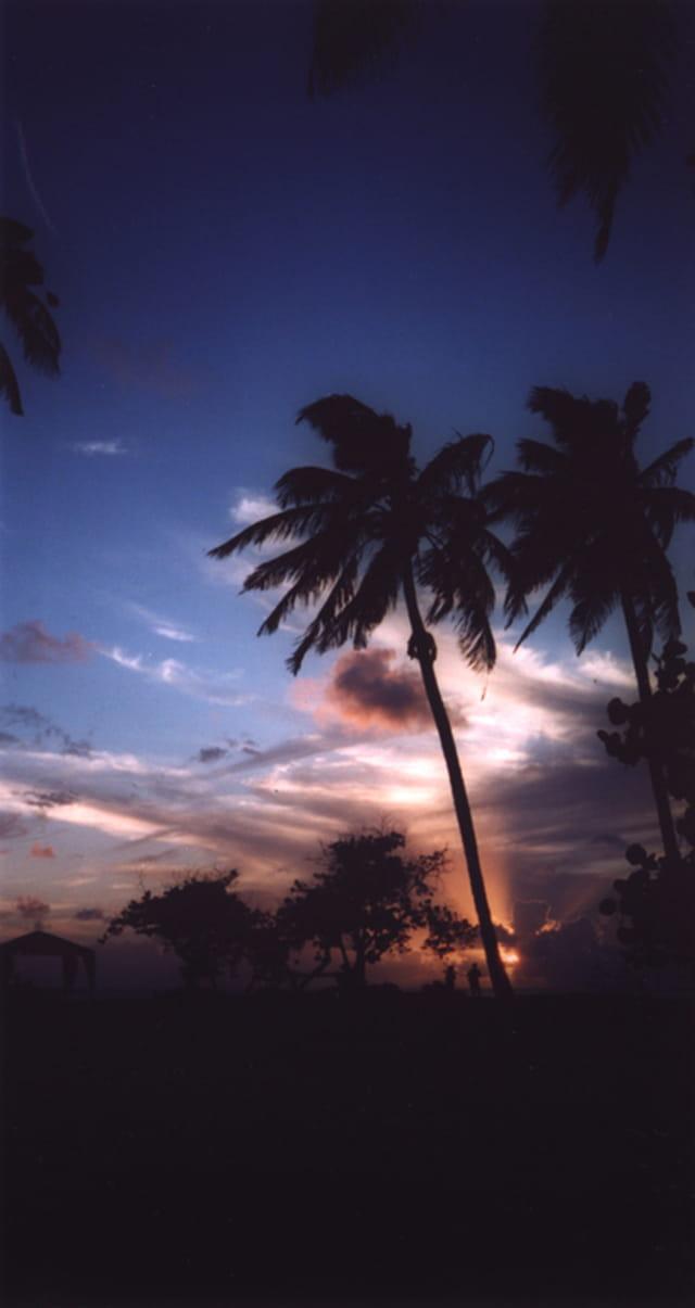 Palmiers sur fond carribéen
