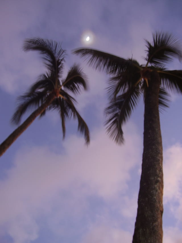 Palms under the moon
