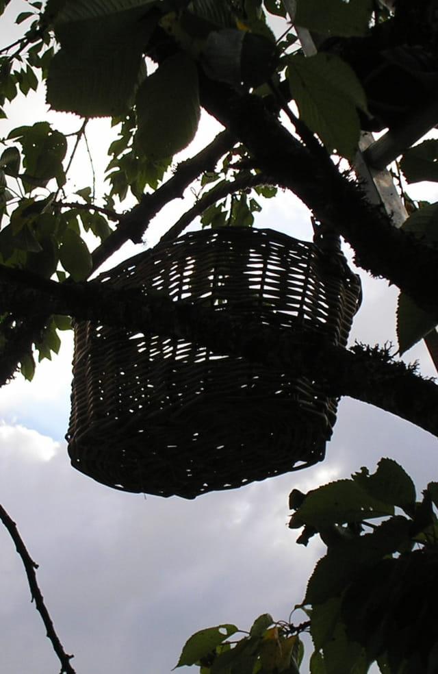 Panier dans le cerisier