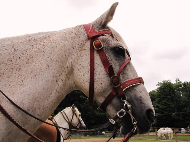 Panorama de chevaux.