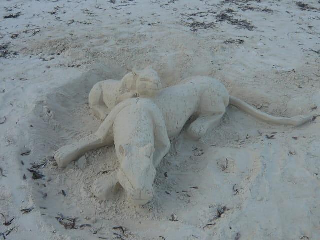 Panthère de sable