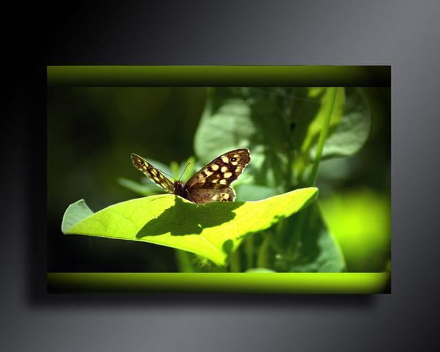 Papillion vert