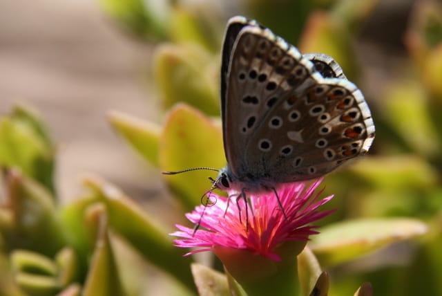 Papillon à l'heure du repas