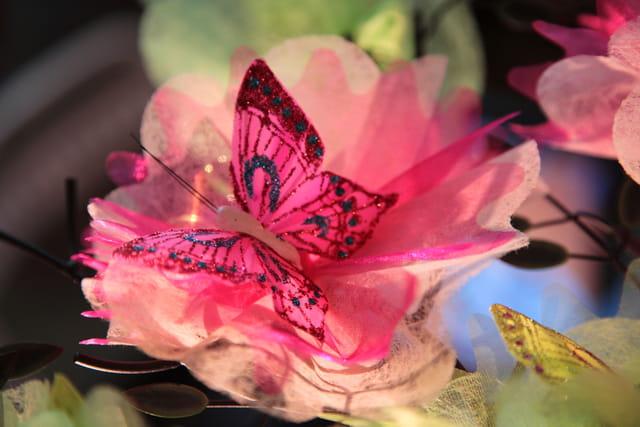 Papillon au repos !!!