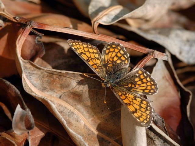 Dernier papillon d'automne